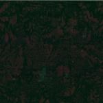 1895-696-Bear <!DATE>
