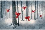 Q4461-292-Cardinal <!DATE>
