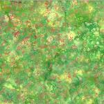 T2399-519-Hibiscus <!DATE>